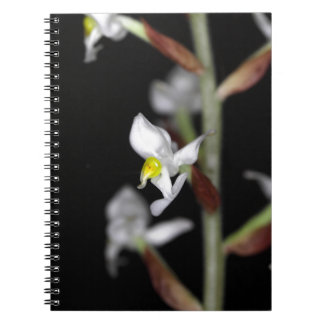 Flower of the orchid Ludisia discolor Notebooks