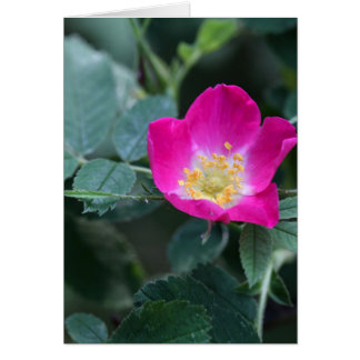 Flower of the wild Soft Downy Rose Card