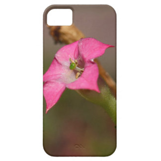Flower of tobacco (Nicotiana tabacum) Barely There iPhone 5 Case