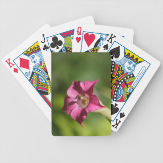 Flower of tobacco (Nicotiana tabacum) Bicycle Playing Cards