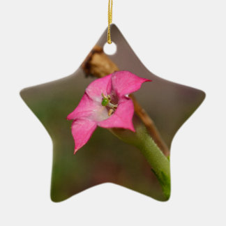 Flower of tobacco (Nicotiana tabacum) Ceramic Ornament