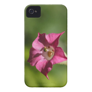 Flower of tobacco (Nicotiana tabacum) iPhone 4 Covers
