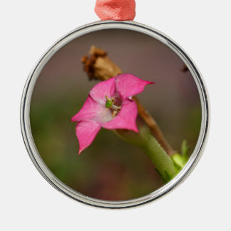 Flower of tobacco (Nicotiana tabacum) Metal Ornament