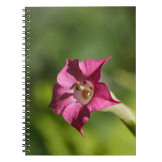 Flower of tobacco (Nicotiana tabacum) Spiral Notebook