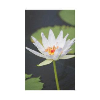 Flower photo print on canvas