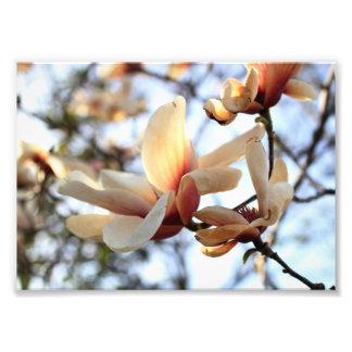 Flower Photograph Print