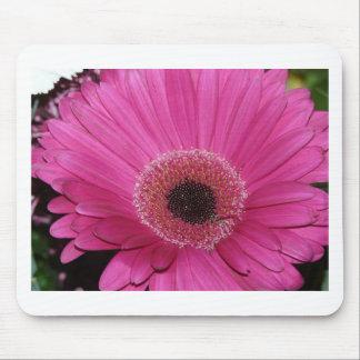 flower pink gerber daisy mouse mats