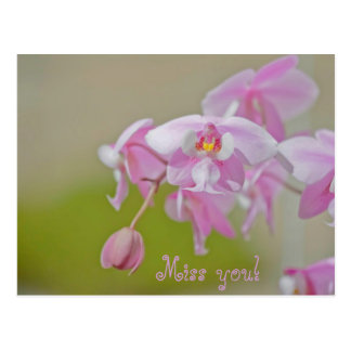 Flower Pink Miss You Postcard