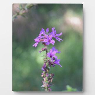 flower_purple.JPG Plaque