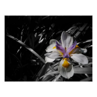 Flower - Purple Yellow White Poster