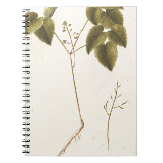 Flower Study - Watercolor Note Book