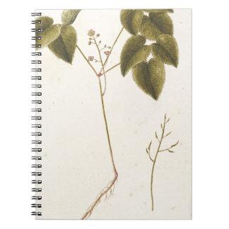 Flower Study - Watercolor Notebook