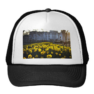 Flower Themed, Blooming Yellow Daffodils Bathed In Cap