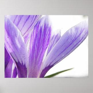 Flower Time - Spring Crocus Poster