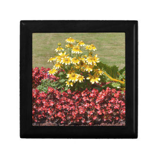 Flowerbed of coneflowers and begonias gift box