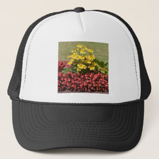 Flowerbed of coneflowers and begonias trucker hat