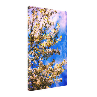Flowering Cherry Tree Canvas Print