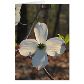 Flowering Dogwood - Customized2 Note Card