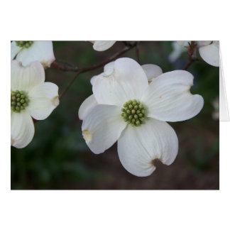 Flowering Dogwood Greeting Card