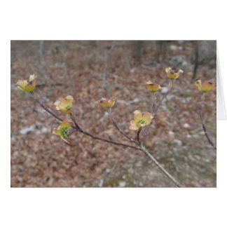 Flowering Dogwood Notecard Note Card