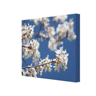 Flowering Dogwood Tree Branch Canvas Print