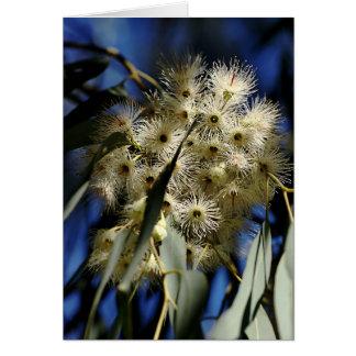 Flowering Gum Tree -White Flowers Greeting Cards