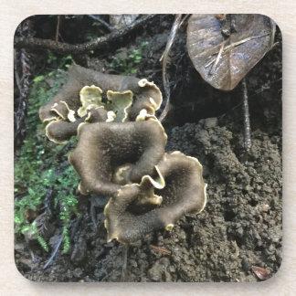 Flowering Mushrooms Coaster