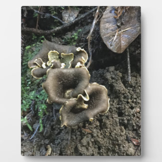 Flowering Mushrooms Plaque