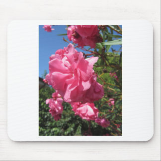 Flowering Oleander against the blue sky Mouse Pad