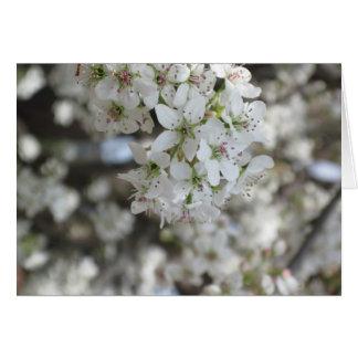 Flowering Pear Tree Bloom Greeting Card