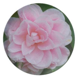 Flowering Pink Camelia Plates