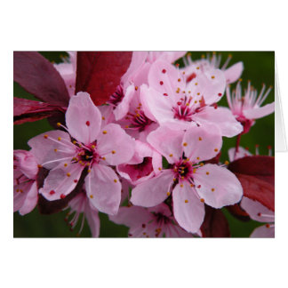 Flowering Plum - Blank card