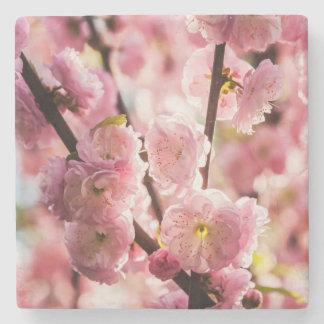Flowering Plum - Pink Paradize Stone Coaster