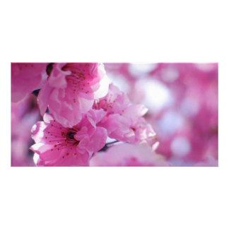Flowering Plum Tree Blossom Customised Photo Card
