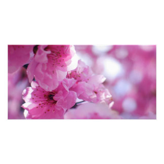 Flowering Plum Tree Blossom Customized Photo Card