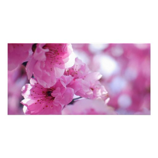 Flowering Plum Tree Blossom Customized Photo Card