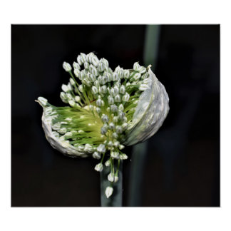 Flowering Spring Onion Poster