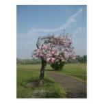 flowering tree postcards