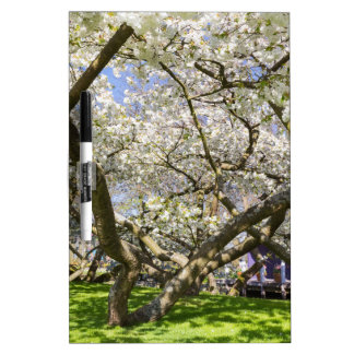 Flowering trees with white blossom in spring dry erase board