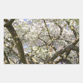 Flowering trees with white blossom in spring rectangular sticker