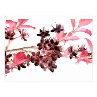 Flowering Twig Pink Japanese Cherry Blossom Postcard