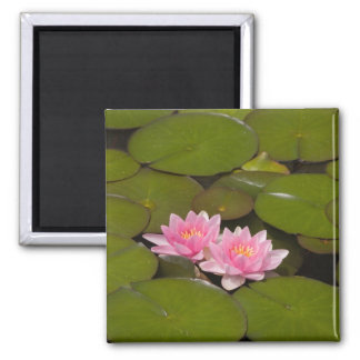 Flowering water lilies square magnet