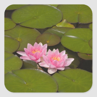 Flowering water lilies stickers