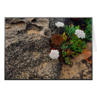Flowers and rocks on the coast of Portugal Card