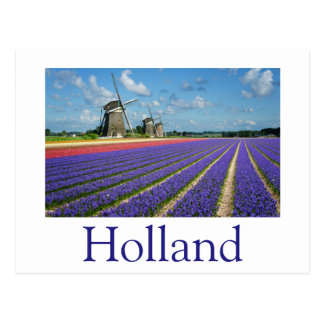 Flowers and windmills in Holland text postcard