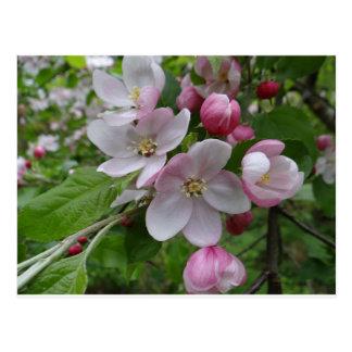 Flowers Apple Blossom Pink Pattern Art Postcard