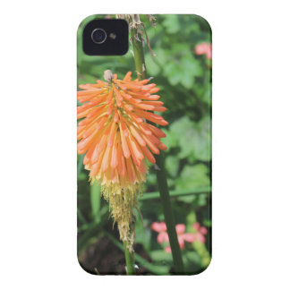 Flowers at The Sky Garden, London iPhone 4 Case-Mate Case