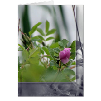 Flowers by the Lake - Pink Card