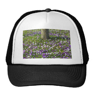 Flowers field crocuses in spring grass with tree cap