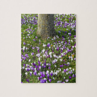 Flowers field crocuses in spring grass with tree jigsaw puzzle